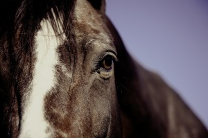 Hypnotherapy for horse riding anxiety