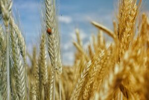 Whole grains are key to a long life