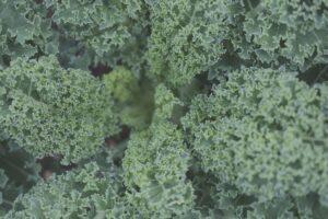salad-texture-green-kale
