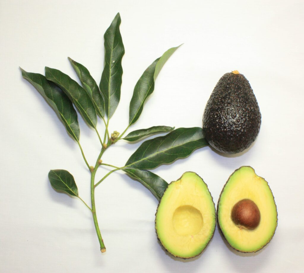 benefits of avocado