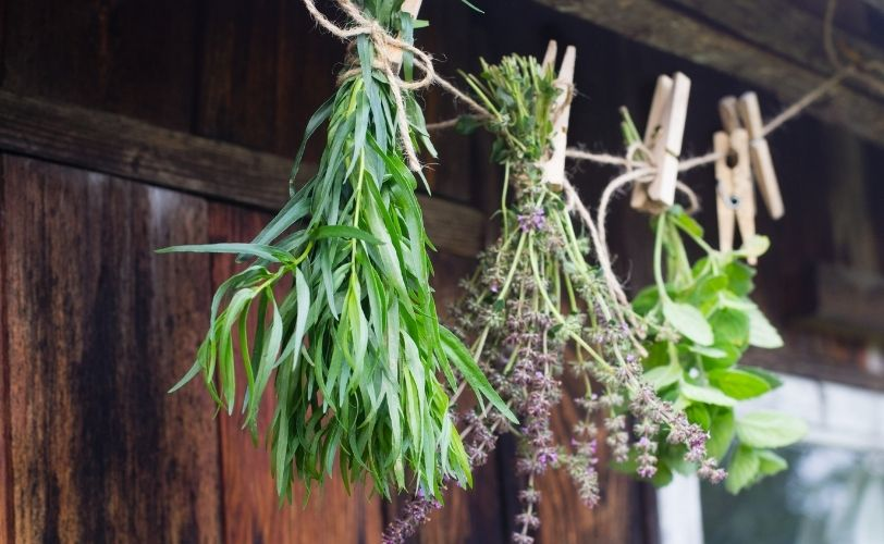 Selection of dried hanging herbs