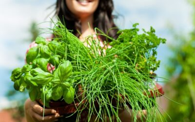 How to use adaptogenic herbs for stress