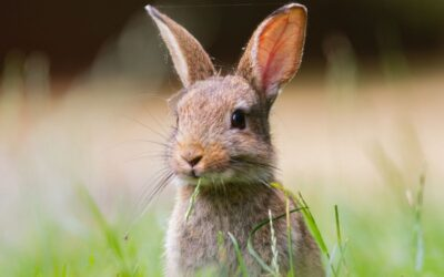 Poo like rabbit droppings? Here's why…