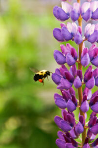 Honeybees may offer a natural alternative to antibiotics