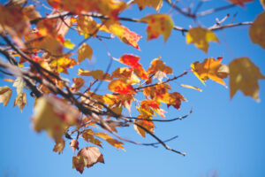 nature-leaves-fall-neature
