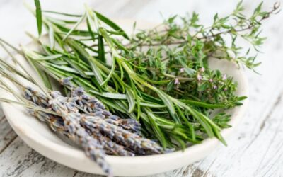 How to grow your own well-being with herbalism