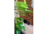 Coppergate House - E1<br />Plant