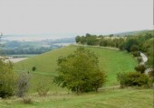 Working within the Cranbourne Chase, West Wiltshire Downs AONB