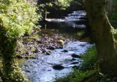 Ecotherapy - using Nature for healing