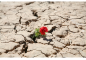 Resilience<br />Learn how to increase your resilience....