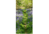 Pathways<br />Counselling with a walk in the woods