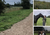 Equine assisted psychotherapy set in lovely quiet countryside .