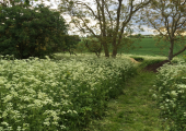 Our Wild Garden<br />Walk and talk therapy