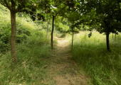 Woodland walk<br />Nature therapy
