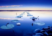 mindfulness path