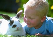Rabbit used for animal assisted therapy