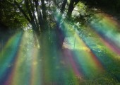 Rainbow light through the trees