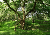 Tree<br />Part of the woods that I work from