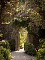 The Walled Garden Counselling Practice