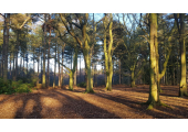 beautiful wooded areas for walk and talk therapy