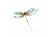 Dragoonfly Cousnlling & Psychotherapy