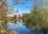 Walking Therapy in Chelmsford