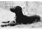 Kerri Relton - Pet Bereavement Counsellor image 1