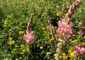 Wildflower farmland