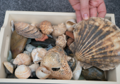 Using shells can help describe things you can't find the words for.