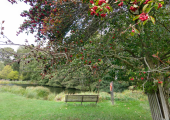 Walk & Talk in Home Park