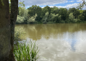 Walking and talking therapy, Thornton country park Brentwood