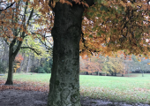 Autumn Walk and Talk