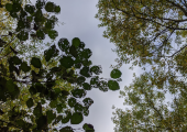 Take a different view - this image shows the sky visible through the tree canopy