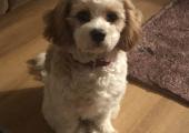 Isn't she cute? She'd love to meet you!