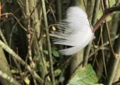A feather caught on a tree. Sometimes noticing the smallest details can yield profound reflections.