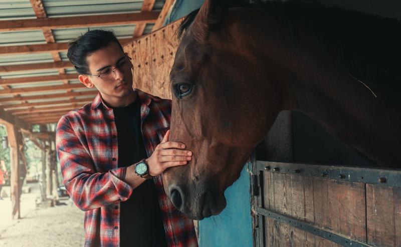 Man stroking horse