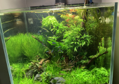 Soothing & tranquil aquascape @focus counselling