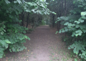 Woodland Space Summer