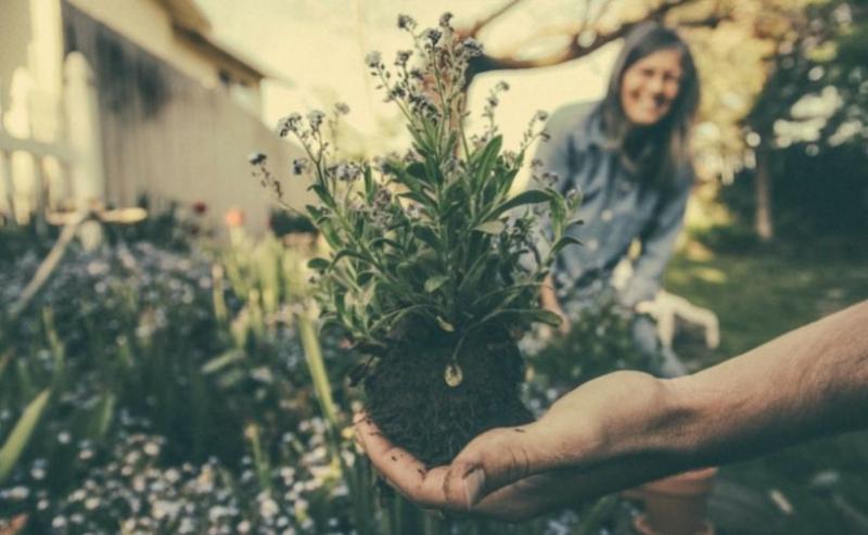 Man planting flower