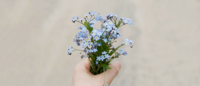 Hand holding a selection of forget-me-not flowers
