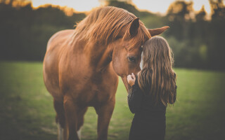 Therapy with horses