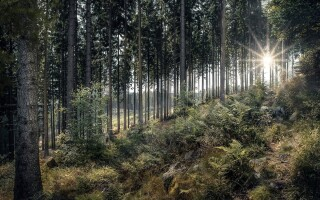 The therapeutic benefits of walking in nature