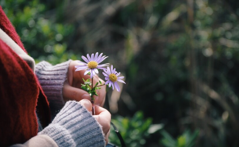 Image of a woman's hand holding a flower