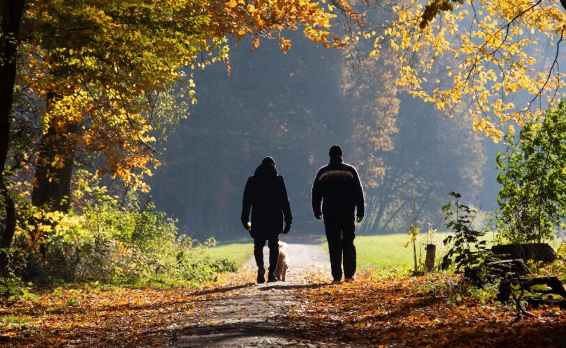 Two people walking along woodland path
