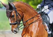 Equine Hypnotherapy