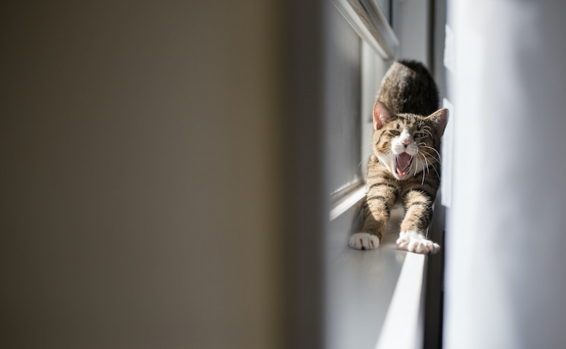 Cat yawning and stretching on the windowsill