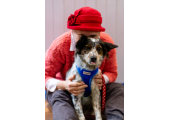 My companion - Coaching the dog