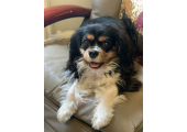 Puzzle my Therapy Dog<br />Therapy Dog