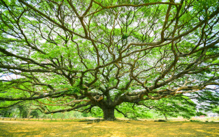 Want to change and grow? Be like a tree