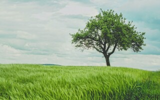 Why you should stop what you're doing and look at a tree